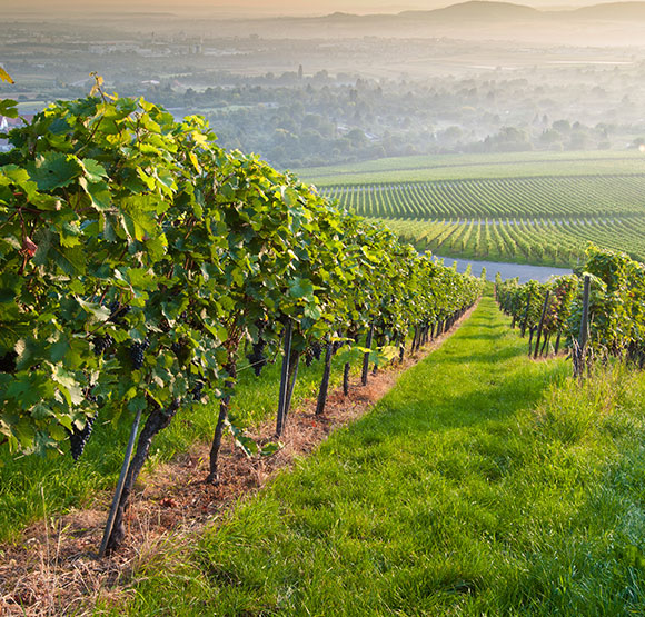 Menghini Winery at Julian